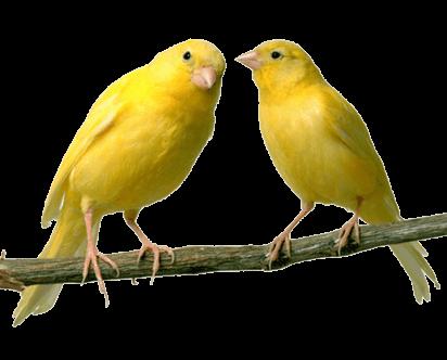 oiseau fond blanc
