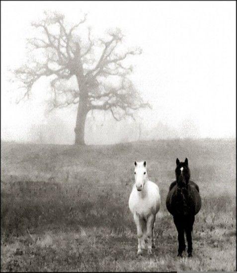 chevaux image noir et blanc