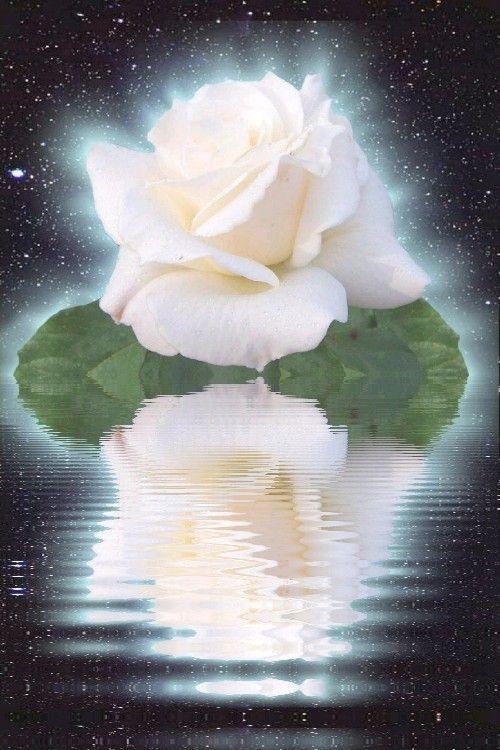 """Résultat de recherche d'images pour """"rose blanche et ange"""""""